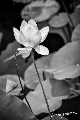 Kyoto en Noir et Blanc- ELA1267-Edit