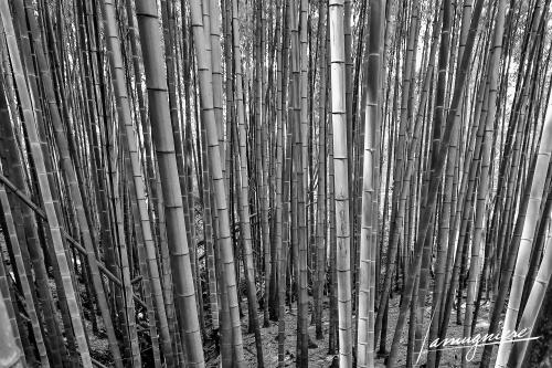 Kyoto en Noir et Blanc- ELA1352-Edit (1)