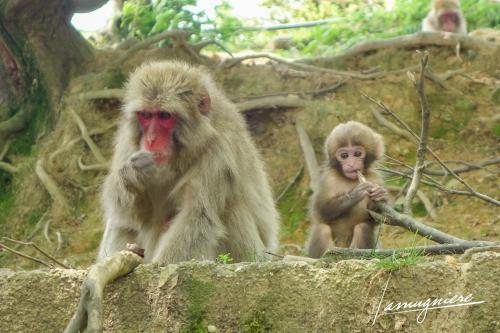 monkey park iwatayama kyoto- DSC2027
