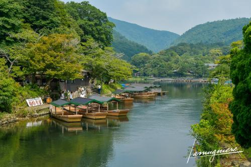 monkey park iwatayama kyoto- ELA1118
