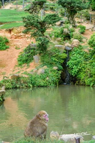monkey park iwatayama kyoto- ELA1141