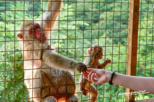 monkey park iwatayama kyoto- ELA1149