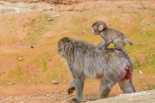 monkey park iwatayama kyoto- ELA1211