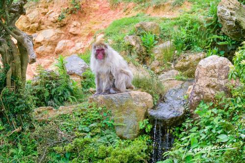 monkey park iwatayama kyoto- ELA1218