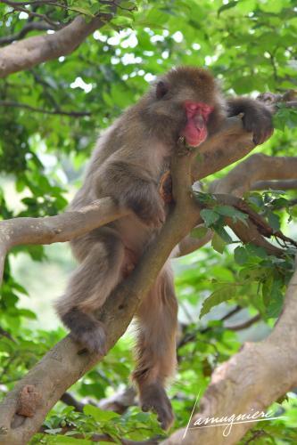 monkey park iwatayama kyoto- ELA1254