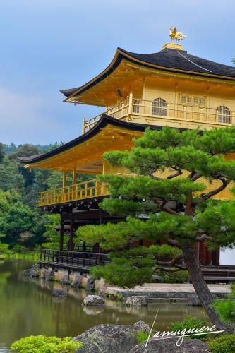temple kinkaku-ji pavillon or kyoto- ELA1417