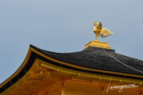 temple kinkaku-ji pavillon or kyoto- ELA1418