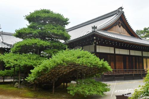 temple kinkaku-ji pavillon or kyoto- ELA1420